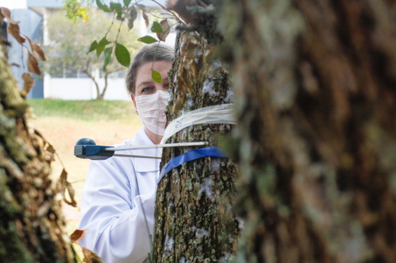 Dia da Árvore: Herbário da UEPG soma 22 mil espécimes catalogadas